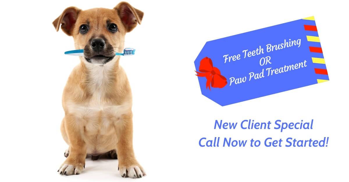 Free Teeth Brushing or Paw Pad Treatment